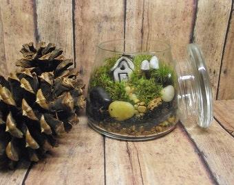 A Little Cute Live Moss Fairy Garden Terrarium with Tiny Raku fired house Glow in the Dark mushrooms- Handmade By Gypsy Raku