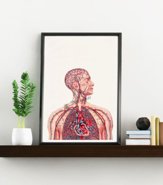 Medicine students gift Human Heart and arteries Circulatory System Anatomy print poster Science prints wall art SKA050WA4