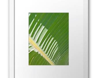 Green tropical palm leaf / mounted photographic print