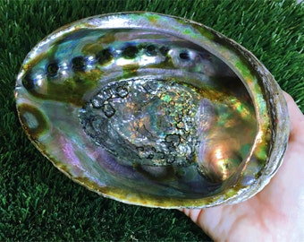 "ONE 6-6 & 1/2"" Large Abalone Shell - Great as a smudging bowl"