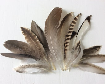 natural feathers-assorted feather-indian feather-Boho feathers-Millinery feathers-cruelty free feathers-Crafting Feathers - Bridal Feathers