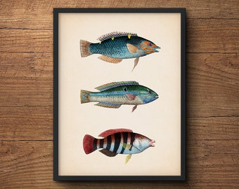 Fish Print, Fish Wall Art, Coastal Wall Art Poster, Nautical Prints, Beach Art, Vintage Art, Coastal Prints, Tropical Art