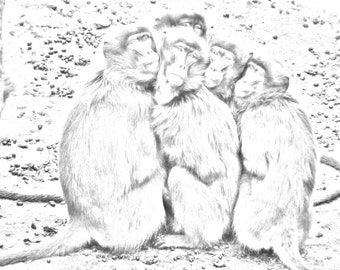 Baboons Grayscale Adult Coloring Page