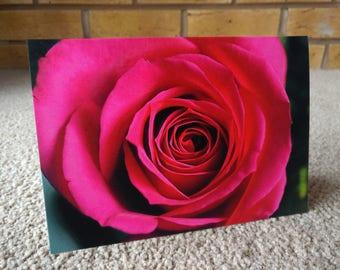 Dark Pink Rose - Greeting card