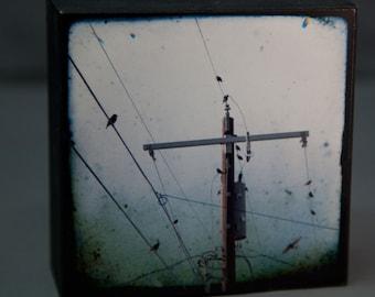 Birds Sky Photograph--Birds in the Hood--4x4 Fine Art on Wood Panel