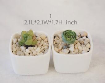 Rare Succulent-Mini White Ceramic Planter with Drainage Hole
