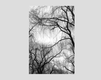 Black and White Weeping Willow Tree Branches, Fine Art Archival Wrapped Canvas Print with Black Edges, Modern Nature Landscape Wall Art