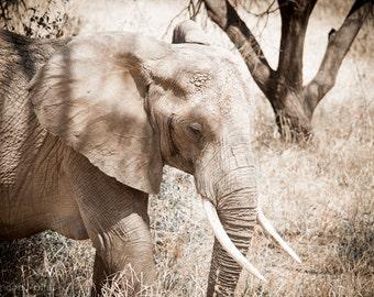 "Photo Print: ""Tusks"" - African Elephant, Serengeti National Park, Tanzania"
