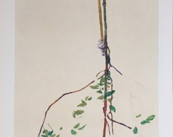 "Schiele Egon, 28, Lithograph, ""Young Tree"""