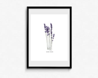 Lavender art print, Herb print, Kitchen print, Botanical print, Watercolor print, Lavender wall art, Printable wall art, Art print