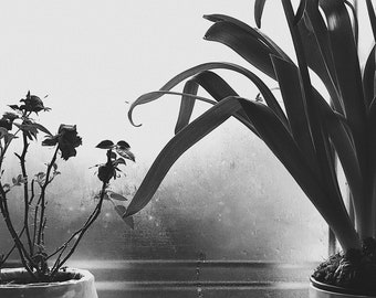 Black and White High Quality Photo Print - Rainy Day Indoors