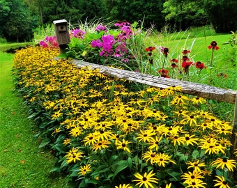Country, Flower Garden, Bird House, Fence, Brown Eyed Susan, Garden Photography, Digital Download, Garden Flowers