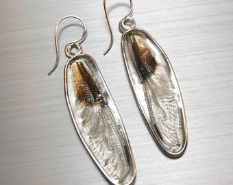 Real dragonfly wing earrings