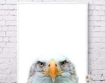 Animal prints, Eagle poster, Printable wall art, Digital prints, Instant download, Bird prints