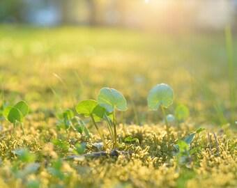 digital print - golden hour | green field