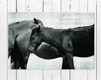 Black and White Horse Print | Horse Photography | Horse Art Print | Wild Horses Outer Banks Beach | Beach Photography | Equestrian Decor Art