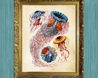 Jelly Fish Art Print Blue Sea Life Print 8 x 10 Natural History Print