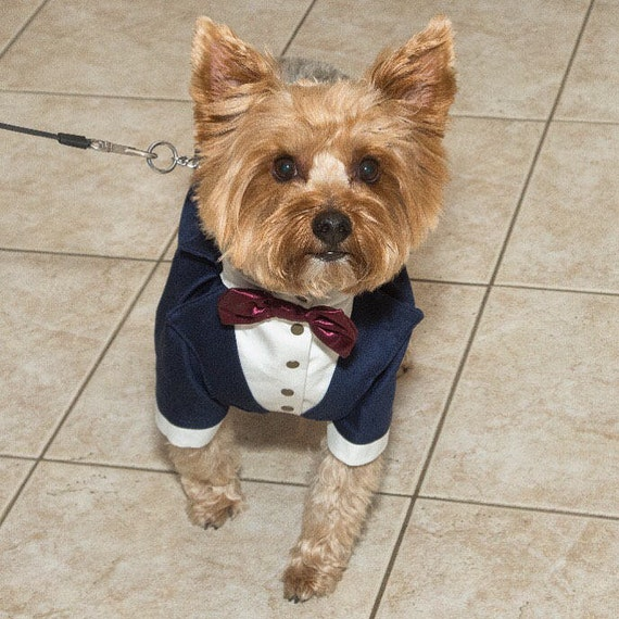 Navy blue dog tuxedo with burgundy bow tie Dog wedding attire