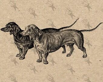 Vintage image Dachshund Basset Badger-dog Sausage Instant Download Digital printable clipart graphic Burlap Fabric Transfer Iron On HQ300dpi