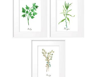 Set of 3 herb prints, Set of 4X6 prints, Parsley, Thyme, Tarragon, Kitchen posters, Green kitchen decor, Watercolor painting, Culinary art