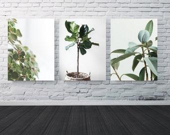 "House Plants 18x24"" Print"