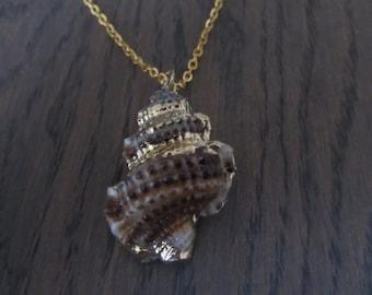 Chain Shell