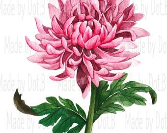Botanical Chrysanthemum