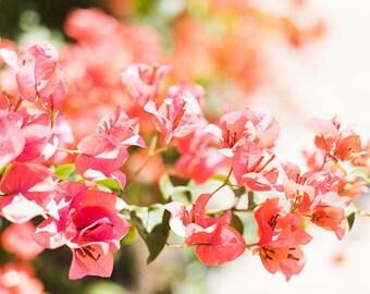 San Diego, California Floral Print