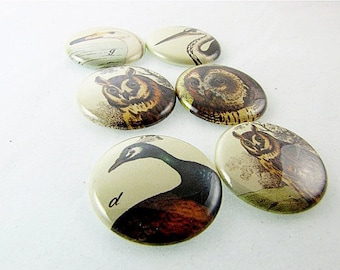 Bird Magnets - fits magnabilities jewelry - Six 1 Inch button magnets owls and friends