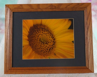 Sunflower close up photo matted in oak frame
