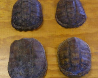 4 Snapping Turtle Shells