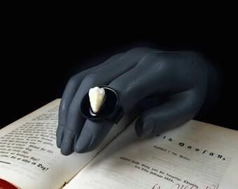 Fingerring dent réelle de l'homme de bizarrerie réglable sur base noire. Bague molaire scellé en laqué brillant. Bijoux de Taxidermie.