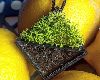 Pendant plant Bill comes with compost and organic seeds