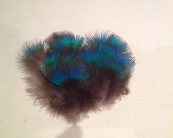 Feathers, Peacock, blue
