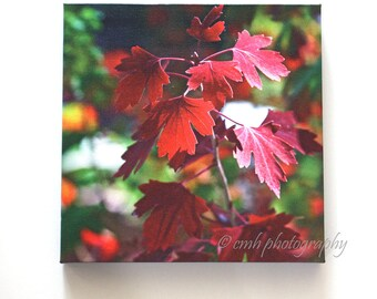 Autumn Color in Colorado - Red Leaves - 10 x 10 Canvas Gallery Wrap - Fine Art Photography - In Stock & Ready to Ship
