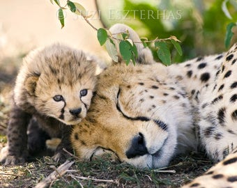 50% OFF SALE, Baby Cheetah With Mom Photo, Nursery Print, Mom and Baby Animal Photograph, Wildlife Photography,  Animal Nursery Art, Safari