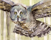 Owl Painting - Print from...