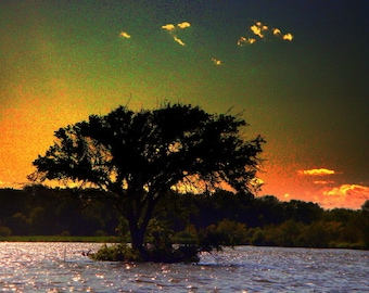 Lake Mendota: Tree at Sunset