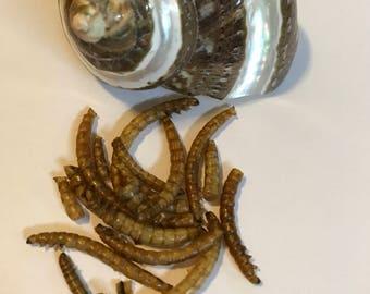 Mealworms ~Hermit Crab Food