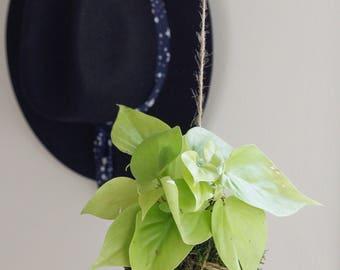 Pothos Kokedama - Easy Care Houseplant, Clean Air Plant, Indoor Plant, Boho, Home Décor, Custom, Handmade, Spring plant,