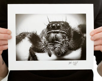 Jumping Spider Photograph (9 x 6 inch Fine Art Print) Black and White Macro Photography