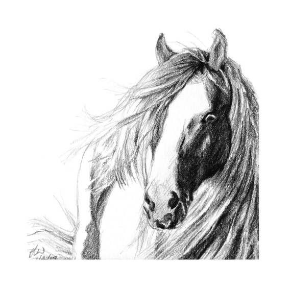 Horse art square horse art print from a pencil drawing