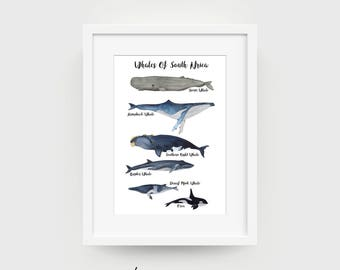 Whales of South Africa | Limited Edition Print | Whale | Whales | Nursery Illustration | Whale Illustration |  Home Decor | Watercolor Print