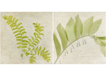 Fern Botanical Print Set,  Rustic Decor,  Fern and Solomon's Seal,  Green Nature Photography, Woodland Art, Forest Wall Decor