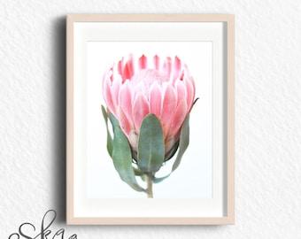 Protea print, pink flower, minimalist photo decor, minimalist poster, wall art, minimalist photo wall art, minimalist photo print, printable