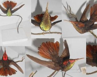 Antique taxidermy bird, Hummingbird