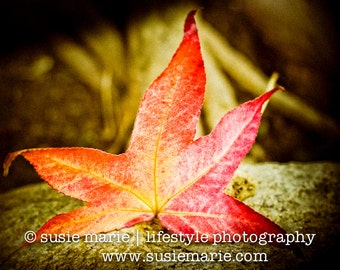 Autumn Red Fall Leaf - Nature Photography Print
