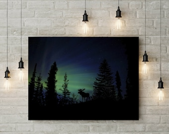 Forest Photography, Animal Photography, Night Sky, Nature Landscape, Nature Photography, Home Decor, Scenery , Wall Decor, PH0110