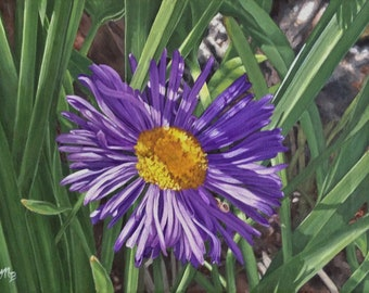 Wild Aster, original acrylic painting by Michelle Brown / Messy Easel Art Studio