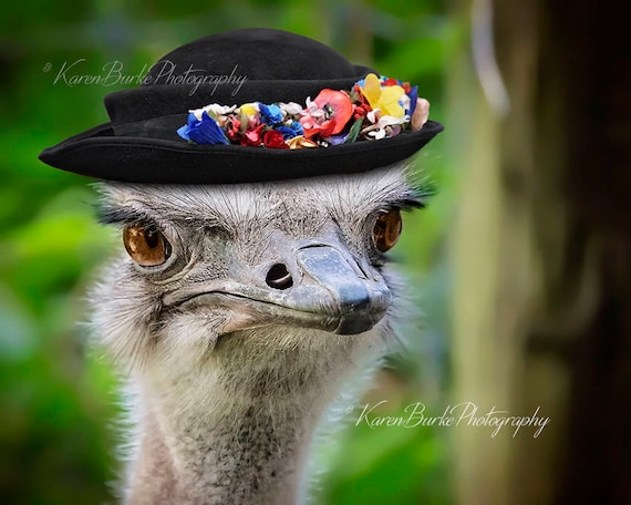 Funny Ostrich Photography Print Angry Bird Whimsical